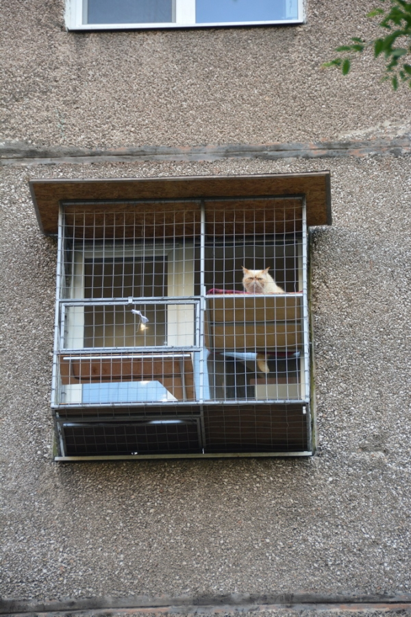 """Вольер для кошек на окно. """"Броневик"""" Днепр."""